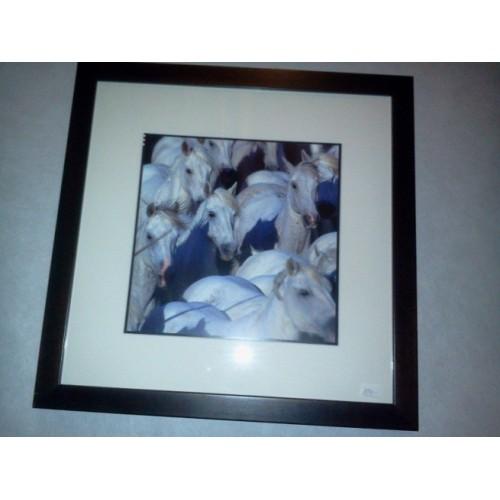 TABLEAU photo de chevaux, dim.39x39cm
