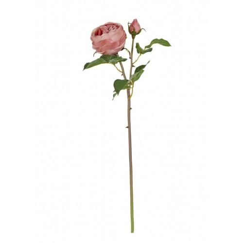 English Rose - Warm Pink